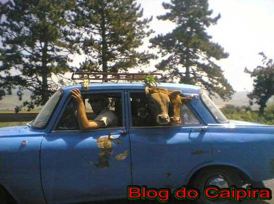 cavalo no carro
