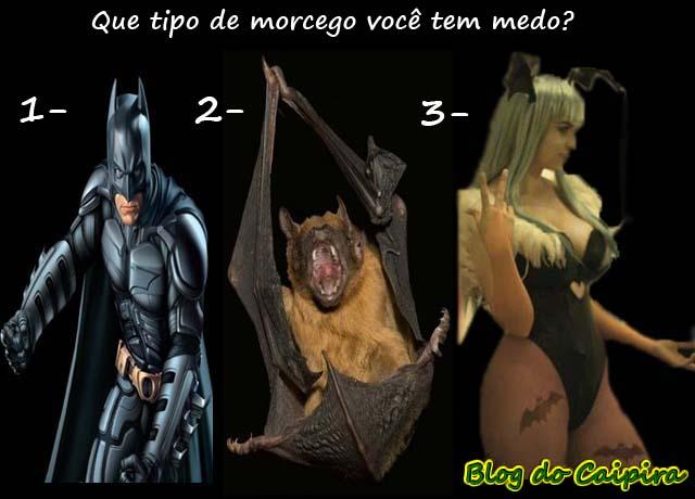 os tipos de morcegos