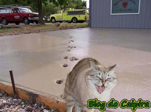 pegadas de gato