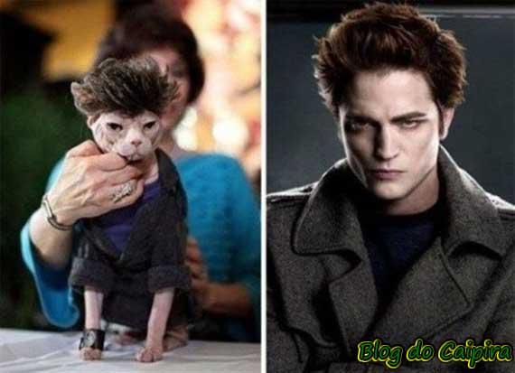 vampiro e cachorro medo