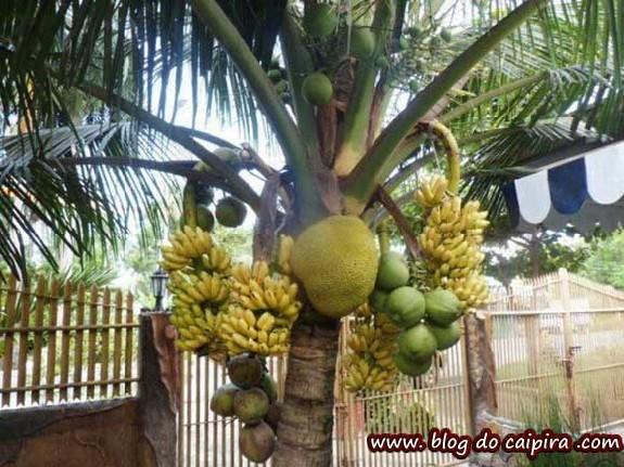 frutas orgânicas do sítio