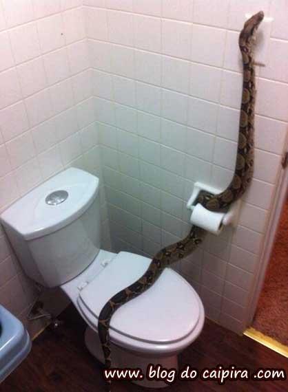 cobra no banheiro