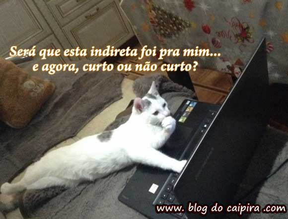gata no facebook